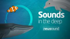 Sounds in the deep logo