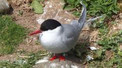An Arctic Tern
