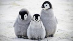 adorable-fluffy-penguins