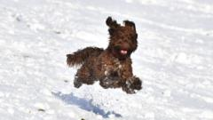 Dog running through snow