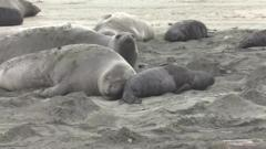 Seals on the beach in the US