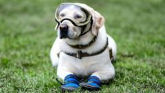 frida-the-rescue-dog