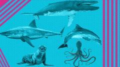 ocean creature.