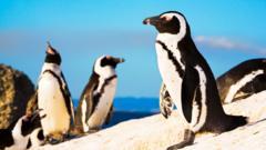 penguins-on-beach