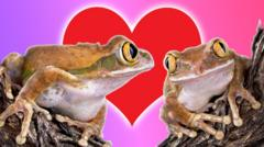 Frogs find love