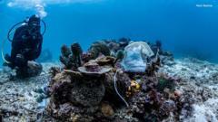 Diver, coral, PPE