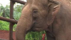 Elephants get new life at sanctuary in Brazil