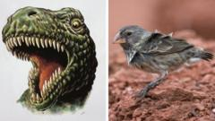 T Rex v Finch