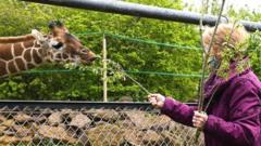 Margaret Keenan feeding her giraffe namesake