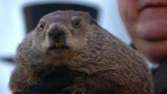 Groundhog in Pennsylvania