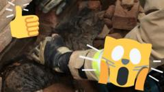 Cat rescued from wall with shocked and thumbs up emoji