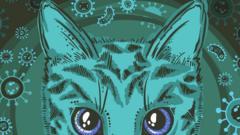 Cat-illustration.