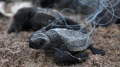 turtle-in-fishing-net.