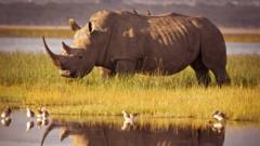 rhino-at-watering-hole