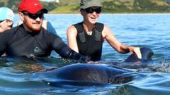 Volunteers helping pilot whales
