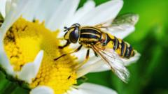 wasp-on-flower.