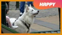 "A dog and the word ""happy"""