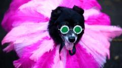 Costume on dog at dog parade