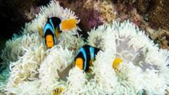 Fish among coral.
