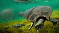 Giant-turtles