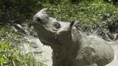 tam-the-rhino.