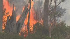 Forest fire in Tasmania