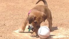 Daisy checks out a baseball