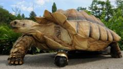 Tortoise that's had its amputated front leg replaced with a wheel
