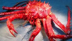 King crab from Palmer Deep (Craig Smith)