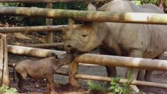 An eight-day-old baby black rhino with its dad at San Francisco Zoo