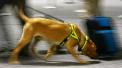 Sniffer dog goes past suitcase