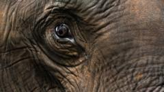 34 tons of elephant ivory has been seized in 2012