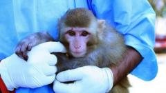 Monkey sent into space by Iran