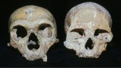 Neanderthal and modern human kulls