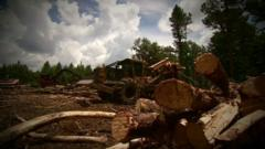 Trees being felled in Georgia, USA