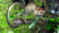 Chinese primate