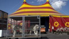 Tigers at a circus in California