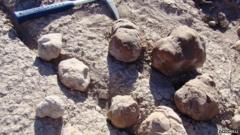 Coprolites exposed at latrine