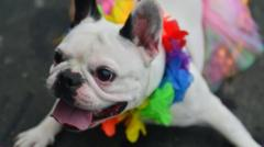 A dog with a colourful garland