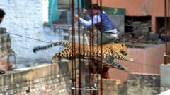 The leopard captured on camera