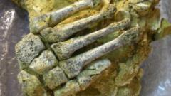 Neanderthal foot remains