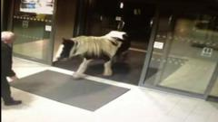 Horse walking into police station