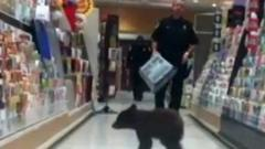 Bear in shop