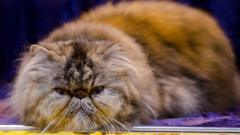 Leadproof at the Supreme Cat Show