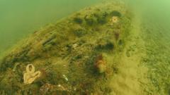 Submerged forest off the Norfolk coastline