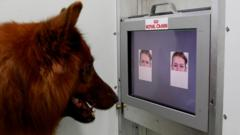 Experimental set-up used to test whether dogs can discriminate emotional expressions of human faces