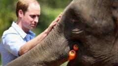 The Duke of Cambridge fed Ran Ran, a 13-year-old rescued female Asian elephant