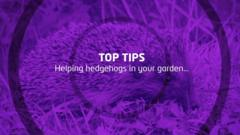 Top tips for helping hedgehogs