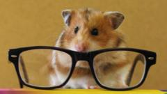 A hamster sits on top a pile of books with a pair of glasses