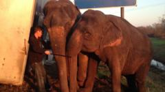 Elephants propping up lorry in Louisiana